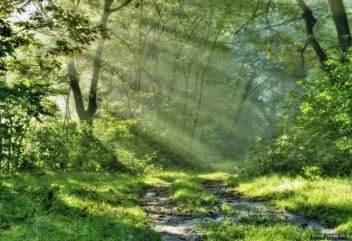 21 marca - Międzynarodowy Dzień Lasów