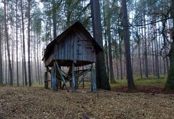 Jak nie zgubić się w lesie